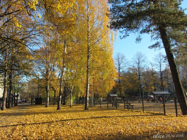 Autumn leaves IMG_0278