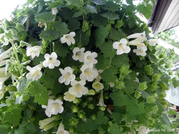 Hanging pot flower