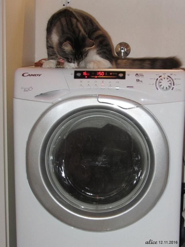 Jacky & laundry time img_2566c