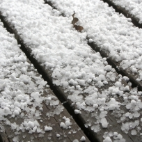 hail IMG_3360C
